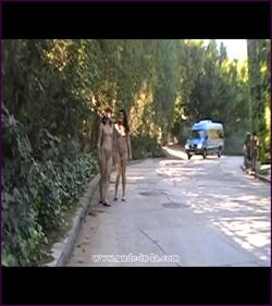 Fullvideoinfo: MPEG-4 Visual (XviD), 2005 Kbps, 30.000 fps